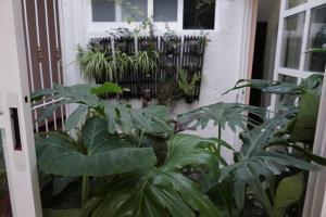 Casa sicarú, Apartmány  Oaxaca City - big - 26
