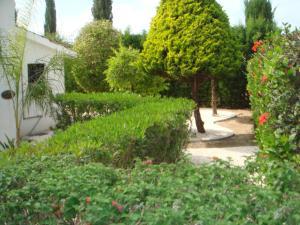 Villa Anna Maria, Vily  Coral Bay - big - 51