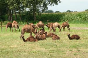 BandB De Kamelenmelkerij