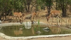 Mokorro Game Ranch and Lodge, Lodge  Chingola - big - 9