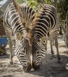 Mokorro Game Ranch and Lodge, Lodges  Chingola - big - 10