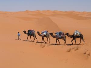 Camel Trek Bivouac, Campeggi di lusso  Merzouga - big - 7