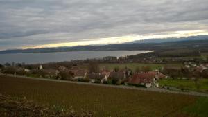 Swiss Borzoi House, Panziók  Bellerive - big - 42