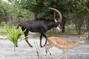Mokorro Game Ranch and Lodge, Lodge  Chingola - big - 17