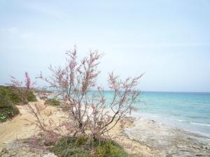 Otranto Mon Amour, Гостевые дома  Отранто - big - 77