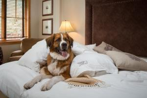 The Hotel Telluride, Hotely  Telluride - big - 6