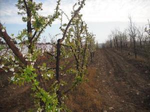 Agriturismo Le Macine, Agriturismi  Magliano in Toscana - big - 13