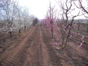 Agriturismo Le Macine, Agriturismi  Magliano in Toscana - big - 14