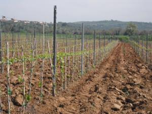 Agriturismo Le Macine, Agriturismi  Magliano in Toscana - big - 15