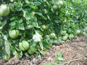 Agriturismo Le Macine, Agriturismi  Magliano in Toscana - big - 19