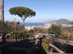 Appartamento Villa degli Ulivi, Appartamenti  Sant'Agnello - big - 48
