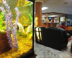 Hotel Santo Tomas, Hotely  Ensenada - big - 35