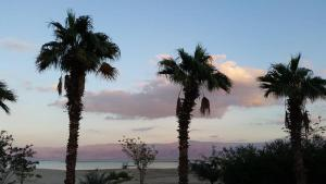 Rose Dead Sea Neve Zohar, Penzióny  Neve Zohar - big - 58