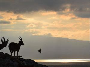 Rose Dead Sea Neve Zohar, Penzióny  Neve Zohar - big - 36