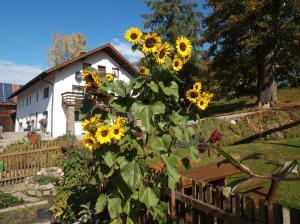 Ferienwohnung Lindenhof, Apartments  Sankt Englmar - big - 36