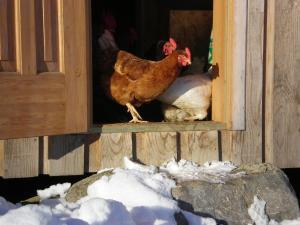 Ferienhof Schweizer, Farm stays  Schwarzenberg im Bregenzerwald - big - 43