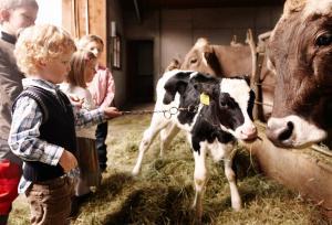 Ferienhof Schweizer, Farm stays  Schwarzenberg im Bregenzerwald - big - 44
