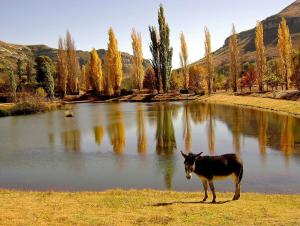 Lake Clarens Guest House, Guest houses  Clarens - big - 32