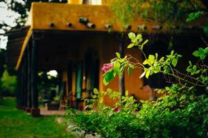 Finca La Encantada, Venkovské domy  San Rafael - big - 27
