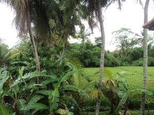 Villa Bhuana Alit, Гостевые дома  Убуд - big - 43