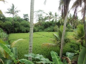 Villa Bhuana Alit, Гостевые дома  Убуд - big - 30