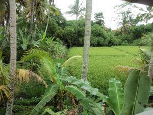 Villa Bhuana Alit, Гостевые дома  Убуд - big - 4
