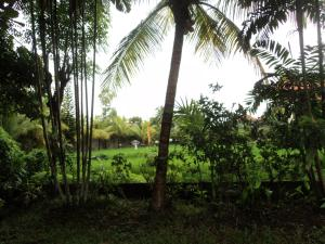 Villa Bhuana Alit, Гостевые дома  Убуд - big - 28