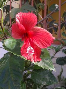 Paraiso Tropical, Alloggi in famiglia  Liberia - big - 33