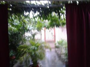 Paraiso Tropical, Alloggi in famiglia  Liberia - big - 24