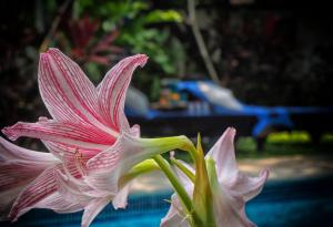 The Secret Garden Goa, Privatzimmer  Saligao - big - 30