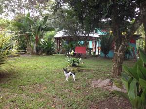 Hostel Casa Chirripo, Affittacamere  Herradura - big - 81