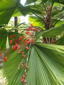 The Secret Garden Goa, Privatzimmer  Saligao - big - 36