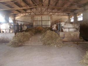 Fattoria Del Quondam, Фермерские дома  Giano dell'Umbria - big - 7
