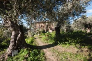Casa Migliaca, Farm stays  Pettineo - big - 37