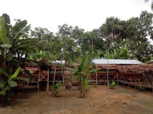 Amazon Golden Snake, Chaty  Santa Teresa - big - 12