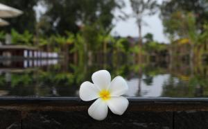 Tropic Jungle Boutique Hotel (Formerly Tropicana Residence), Hotely  Siem Reap - big - 103