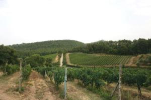 Agriturismo Fattoria Di Gratena, Farmházak  Pieve a Maiano - big - 74