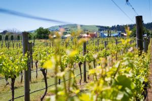 Margrain Vineyard Villas, Отели  Martinborough  - big - 43