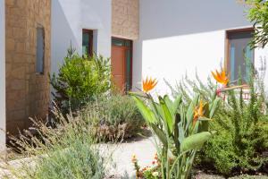 Phaedra & Orestis Villas, Prázdninové domy  Kato Akourdalia - big - 27