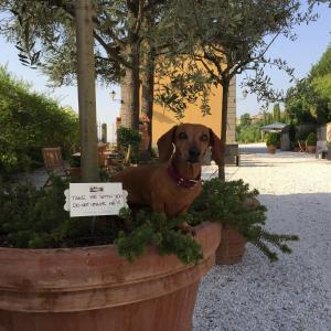 Relais Villa Belvedere, Aparthotely  Incisa in Valdarno - big - 153