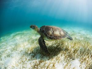 Secrets Akumal Riviera Maya All Inclusive-Adults Only, Hotels  Akumal - big - 50