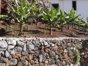 Fazenda do Sousinha, Penzióny  Funchal - big - 58