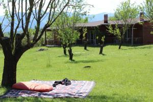 Villa Rustica, Apartmánové hotely  Konitsa - big - 6