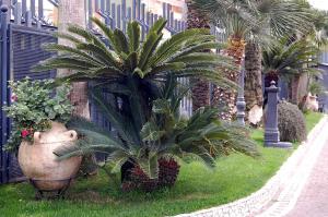 Hotel Ristorante Donato, Hotels  Calvizzano - big - 75