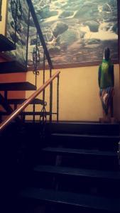 Hotel El Tucan, Hotels  Alajuela - big - 37