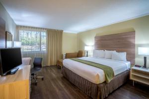 Pokój typu Executive z łóżkiem typu king-size