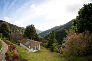 Dantica Cloud Forest Lodge, Providencia