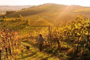Agriturismo Albarossa, Vidiecke domy  Nizza Monferrato - big - 57
