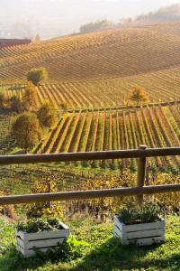 Agriturismo Albarossa, Vidiecke domy  Nizza Monferrato - big - 58