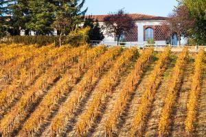 Agriturismo Albarossa, Vidiecke domy  Nizza Monferrato - big - 60